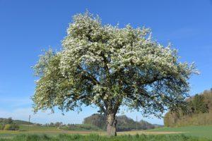 Ağaç Define İşareti