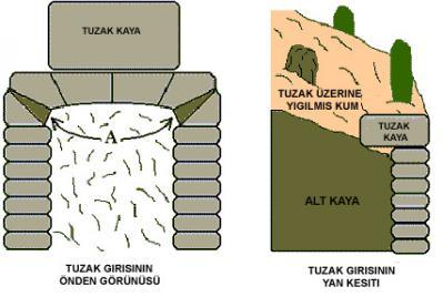 Define Ölüm Tuzakları kaya tuzağı