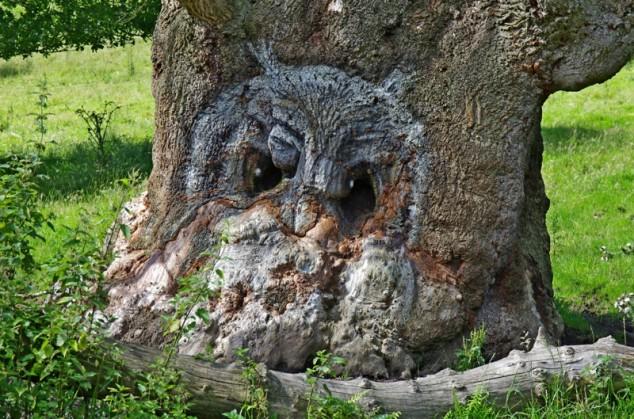 yaşlı ağaç define işareti