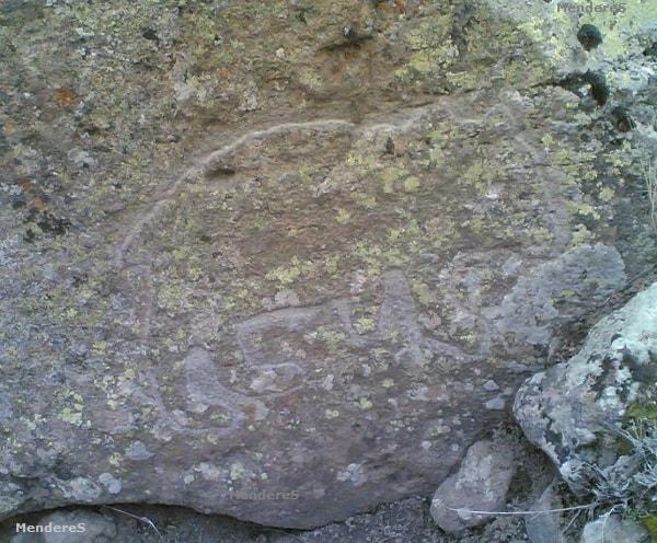 topal ayı