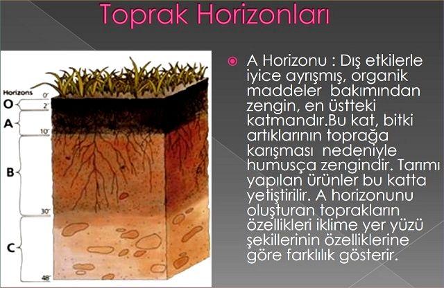 Horizonlar