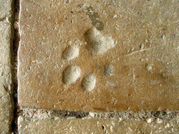 Köpek Ayak İzi Define İşareti