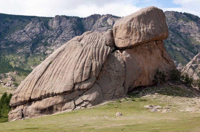 büyük kaya kaplumbağa