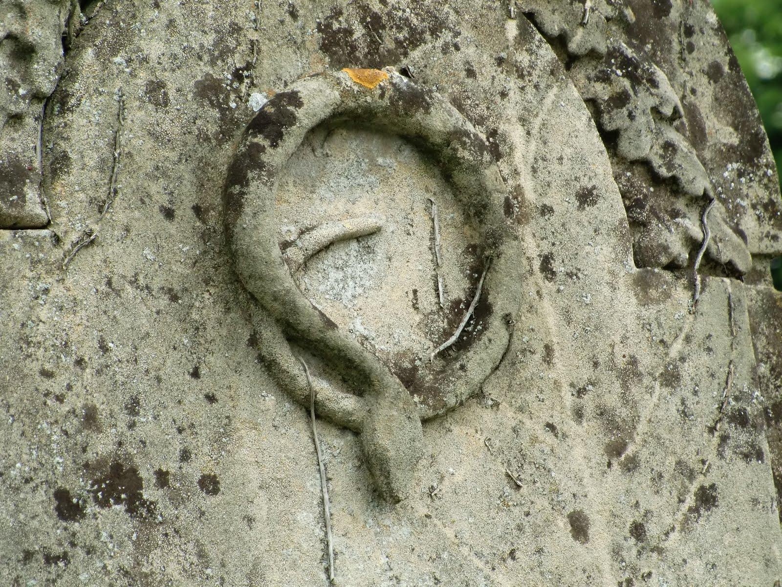 kıvrık yılan