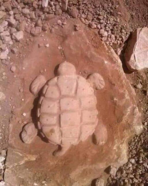 kaplumbağa kabartması